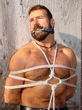 Strong bear man is restrained and squeezed by tight ropes making it impossible f