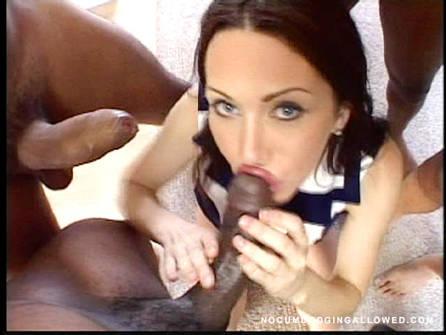 Meat Members / Rayveness